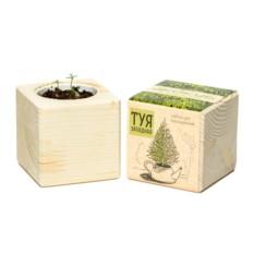Набор для выращивания Ecocube Pine Туя