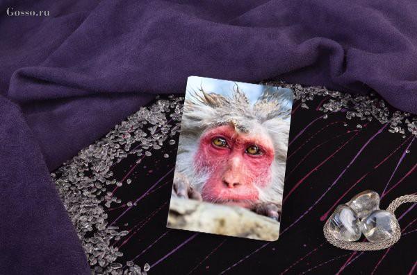 Обложка для паспорта / автодокументов Снежная обезьяна