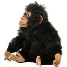 Шимпанзе (Hansa)