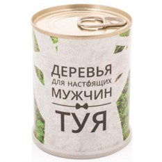 Набор для выращивания Туя - дерево для мужчин