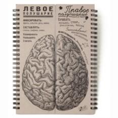 Блокнот Мозг. Полушария равные