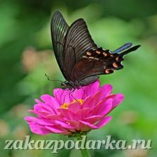 Подарочный сертификат Романтическое свидание среди бабочек