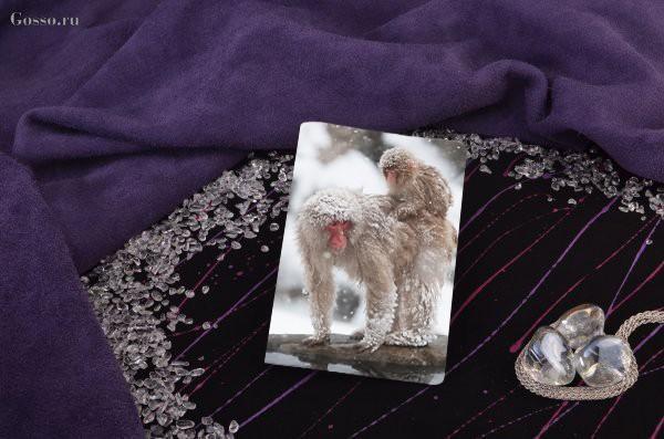 Обложка для паспорта / автодокументов Две снежные обезьяны