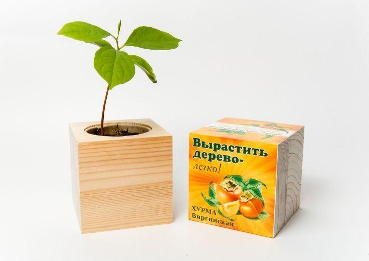 Набор для выращивания дерева
