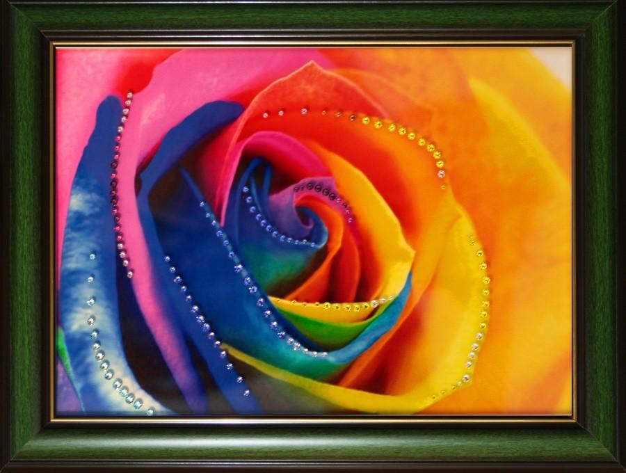 Радужные розы (1)