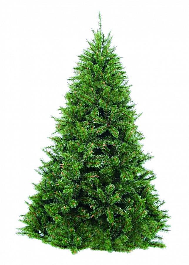 Сосна Триумф Сказочная зеленая, 185 см.