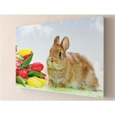 Фотокартина Кролик с тюльпанами
