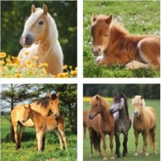 Набор пазлов Ravensburger Красивые лошади