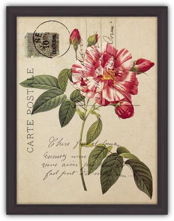 Картина (репродукция) Открытка с пестрой розой