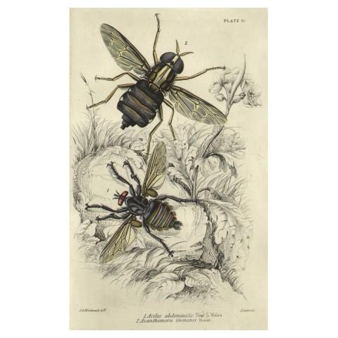 Гравюра «Разновидности насекомых»
