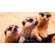 Посещение трогательного зоопарка в любой день для троих