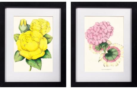 Гравюры «Розы» и «Герань»