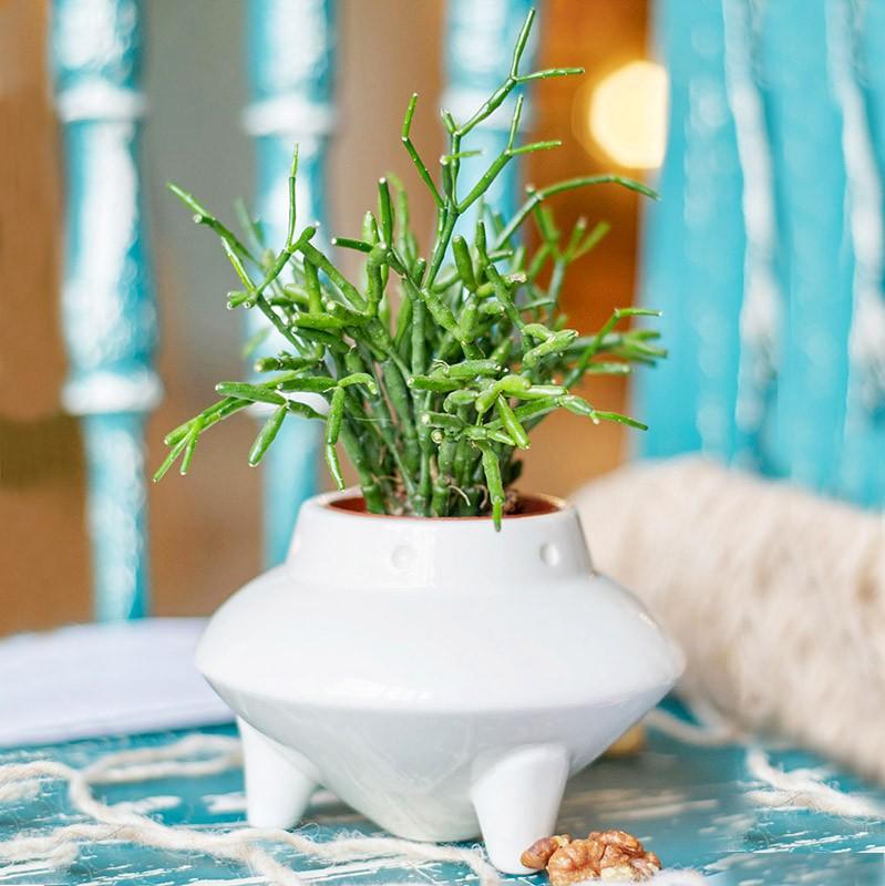 Набор для выращивания травы Нло