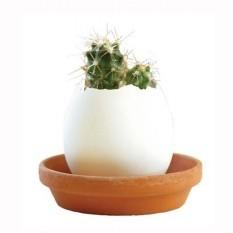 «Мексиканский кактус в скорлупке». Набор для выращивания