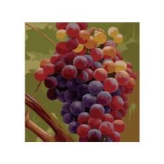 Картины по номерам «Виноград»