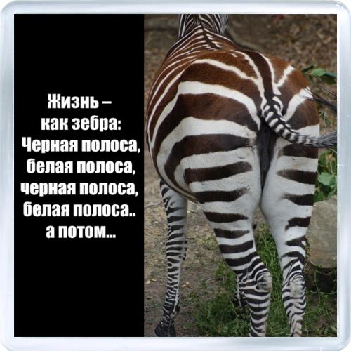 риме покажи картинки зебры как ее любить а не говори ширинском районе