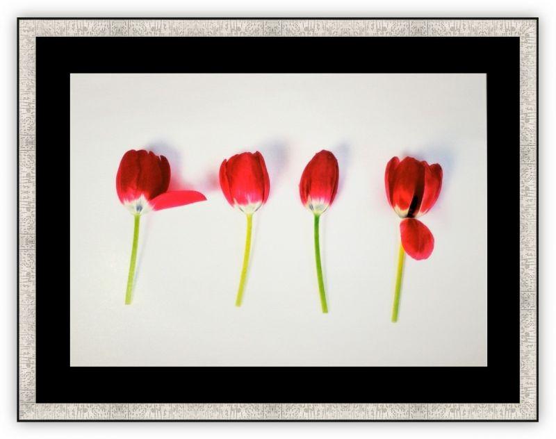 Постер Тюльпаны (Мина Селис)