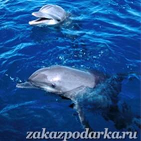 Сертификат Плавание с дельфинами для троих в Ярославле
