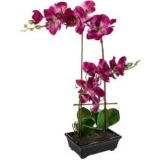 Декоративная композиция Королевская орхидея