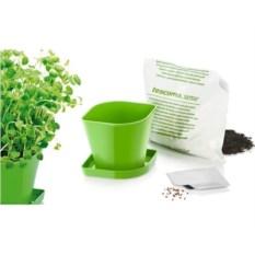 Набор для выращивания пряных растений Руккола от Tescoma