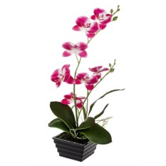 Декоративная композиция Пылкая орхидея
