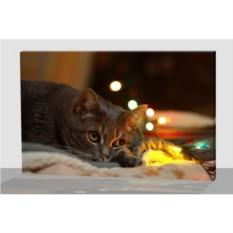 Картина с LED подсветкой Кот мечтатель