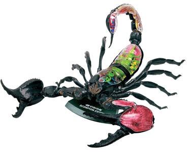 Анатомическая модель Скорпион