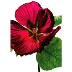 Пазл Ravensburger 1000 деталей Цветок гибискуса
