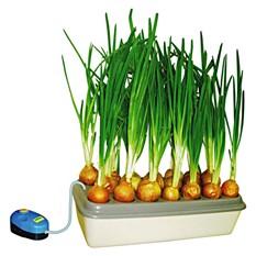 Установка для выращивания лука «Чиполлино»
