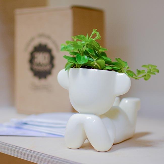 Набор для выращивания Eco Мечтатель с ушками