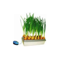 Гидропонная установка для проращивания лука
