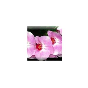 Подарочный сертификат «Цветущая орхидея»