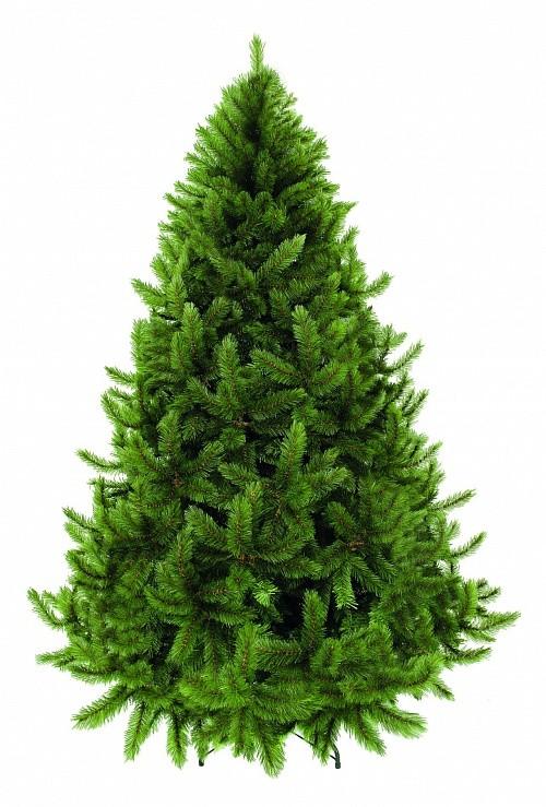 Сосна Триумф Серебряный бор, зеленая, (230 см)