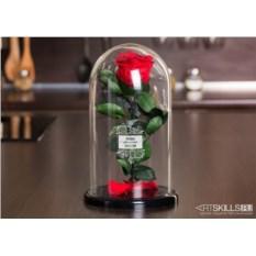 Роза в колбе «Аленький цветочек»