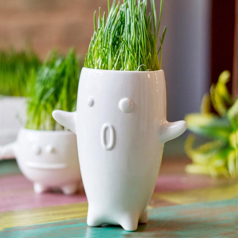 Набор для выращивания травы Тиль