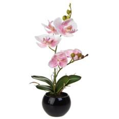 Декоративная композиция Нежность орхидей