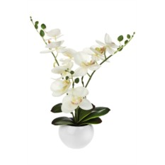 Декоративная композиция Изумительная орхидея