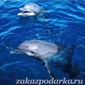 Сертификат 'Плавание с дельфинами для пятерых в Ярославле