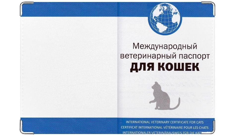 Кошке дом своими руками 198
