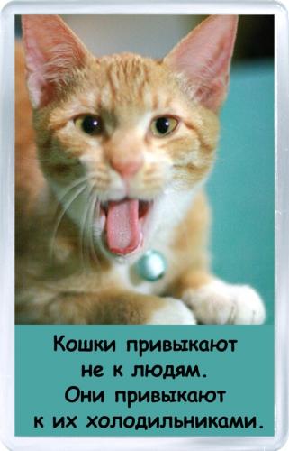 Магнитный подарок: К чему привыкают кошки
