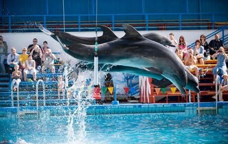 Подарочный сертификат Шоу с дельфинами для двоих