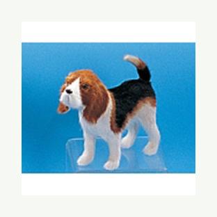 Собака «Бигл»