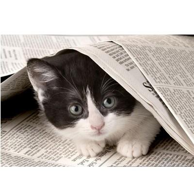 Пазл Любопытный котенок