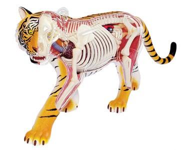 4D пазл-модель Тигр