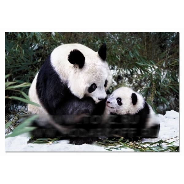 Пазл «Панды»