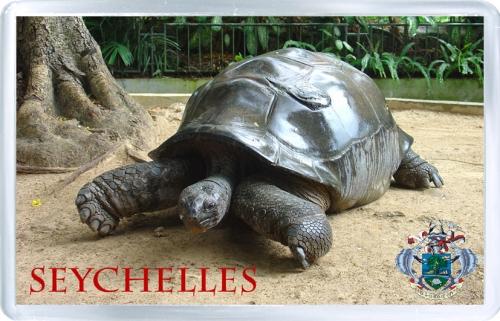 Магнит на холодильник: Сейшелы. Черепаха