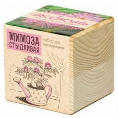 Эко-куб для выращивания Мимоза стыдливая