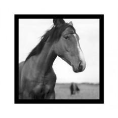 Постер Лошади
