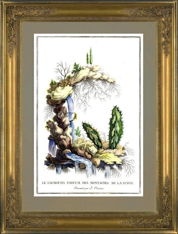 Картина Жак Шартон (J. Charton) Кактусы