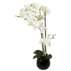 Декоративная композиция Утонченная орхидея